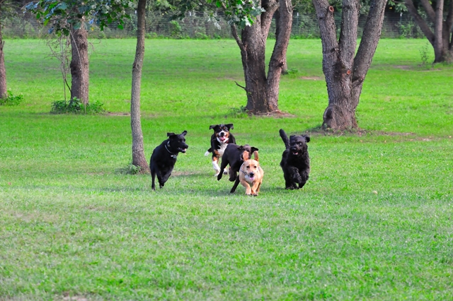 dog parks in south jersey