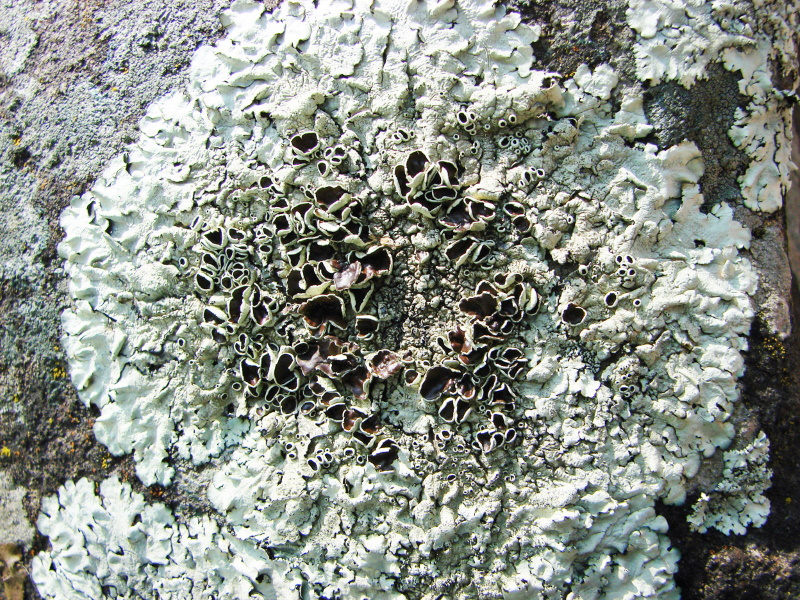 Learn about Lichens! @ Hunterdon County Arboretum | Lebanon | New Jersey | United States