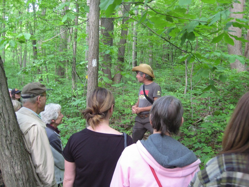 Medicinal Plants of Musconetcong Gorge