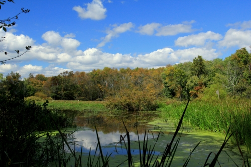 Hunterdon County Assicong Marsh Natural Area
